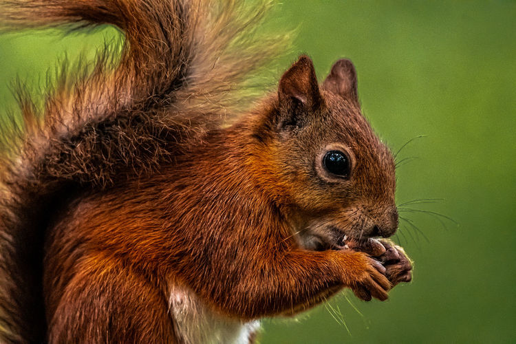 Close-up of squirrel