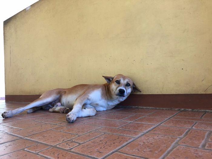 EyeEmNewHere Mammal Dog One Animal Canine Pets Domestic Domestic Animals