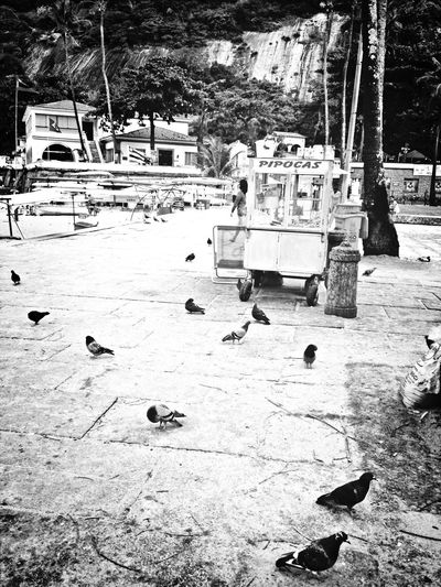 Blackandwhite Eye4photography  Birds Beach