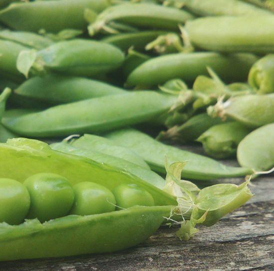 Green Beans Nature Relaxing