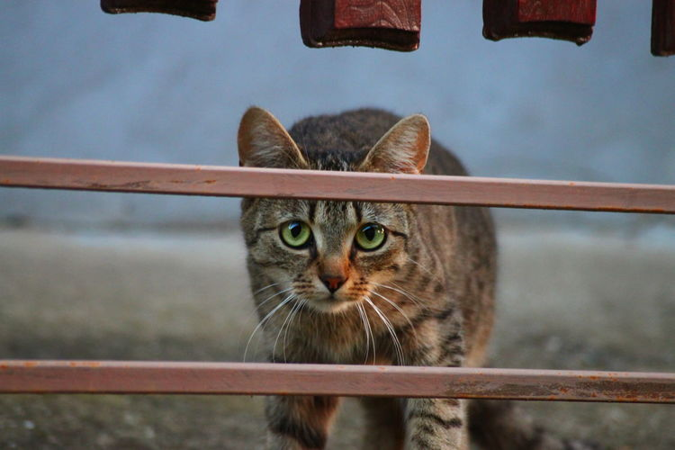 Portrait Of Cat On Field Seen Through Fence