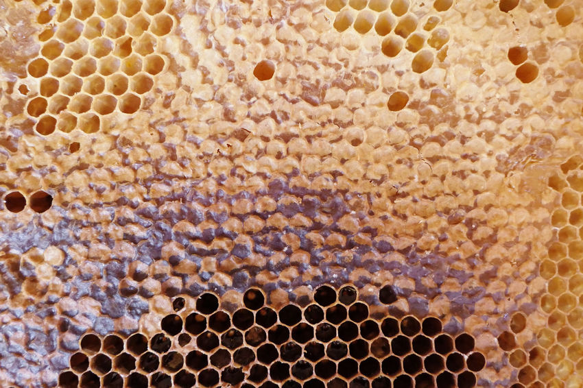 full frame honey comb with honey inside. bee hive. natural background Animal Themes Animal Wildlife APIculture Bee Bee Hive Bee Hives Beehive Beeswax Bienenwabe Bienenwachs Full Frame Honeycomb Pattern