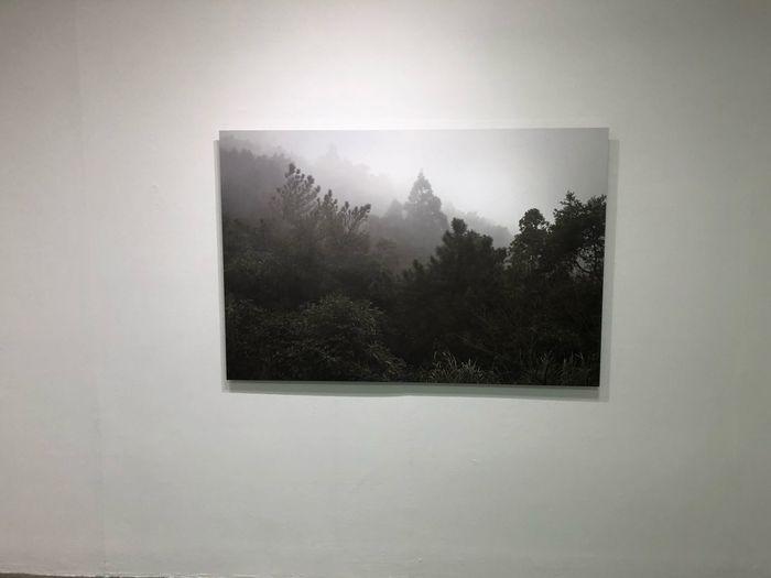 Mocataipei Museum Taipei Art Tree No People
