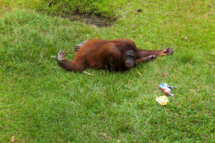 High angle view of a monkey on field