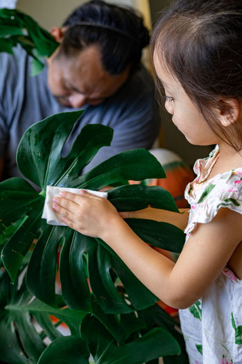 A little girl oiling the houseplant leaves, taking care of plant monstera using a cotton sheet.