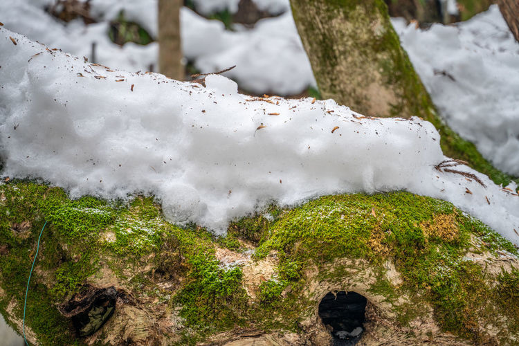 Winter Cold Temperature Snow Day Focus On Foreground Plant No People White Color Nature Close-up Beauty In Nature Covering Moss Tranquility Tree Outdoors Growth Solid Rock - Object