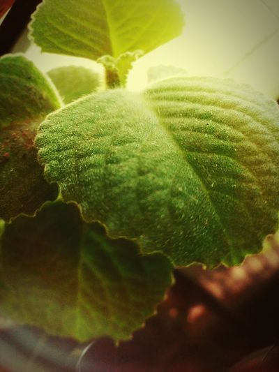 Green Color Leaf Nature Plant Close-up Growth Freshness No People Outdoors Beauty In Nature The Great Outdoors - 2017 EyeEm Awards BYOPaper! The Street Photographer - 2017 EyeEm Awards Plant Life Plant Photography Leaf Edge EyeEmNewHere EyeEmNewHere Live For The Story Neon Life The Week On EyeEm