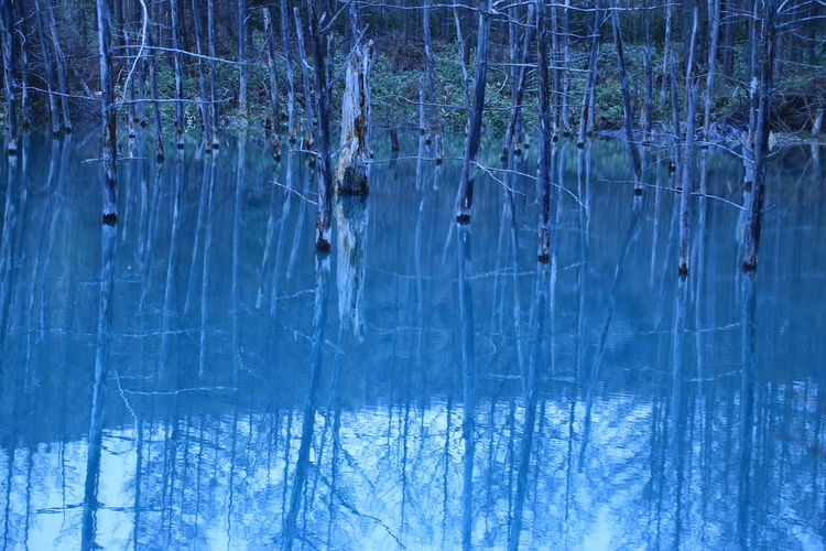 Reflection Blue