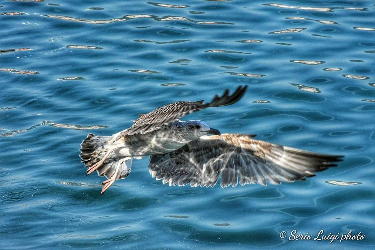 Seagull Swimming Water UnderSea Bird Sea Life Sea High Angle View Waterfront Animal Themes