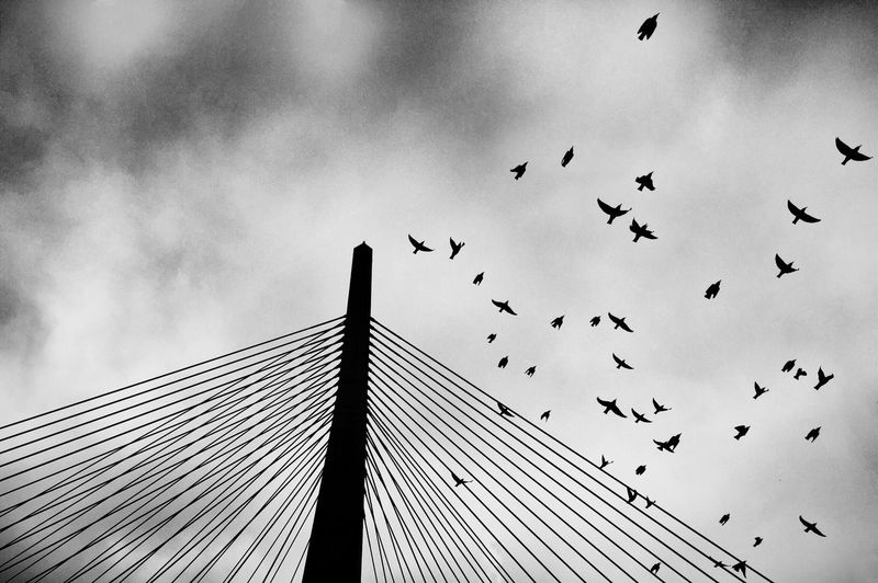 Low Angle View Of Birds Flying Over Cable-Stayed Bridge Against Sky