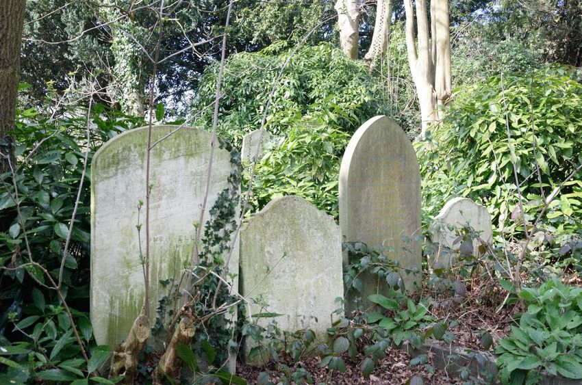 Group of Old Gravestones Hampstead Cemetery Gravestone Stone Churchyard Tombstone Death Christianity Traditional Old English Graveyard Creepy Horror Cemetery