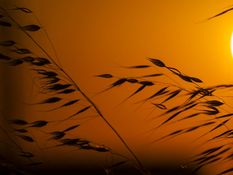 https://www.youtube.com/watch?v=nDN58g5mI1M Avena Avena Fatua Background Backgrounds Bars Beauty In Nature Close-up Copy Space Environment Flora Floral Grass Minimalism Minimalist Nature Nature No People Oat Oats Oats Bars Space For Text Spring Springtime Summer Sunset