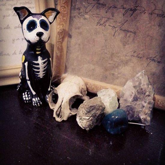 Dog Skull Mineralspecimen