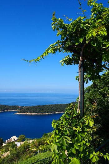 Olympus Blue Cruise Day Dubrovnik Dubrovnik, Croatia Europe Harbour Landmark Landscape Landscape_Collection Landscape_photography Luxury Outdoors Resort Scenery Sea Sea And Sky Ship Sky Travel Travel Destinations Travel Photography Travelphotography