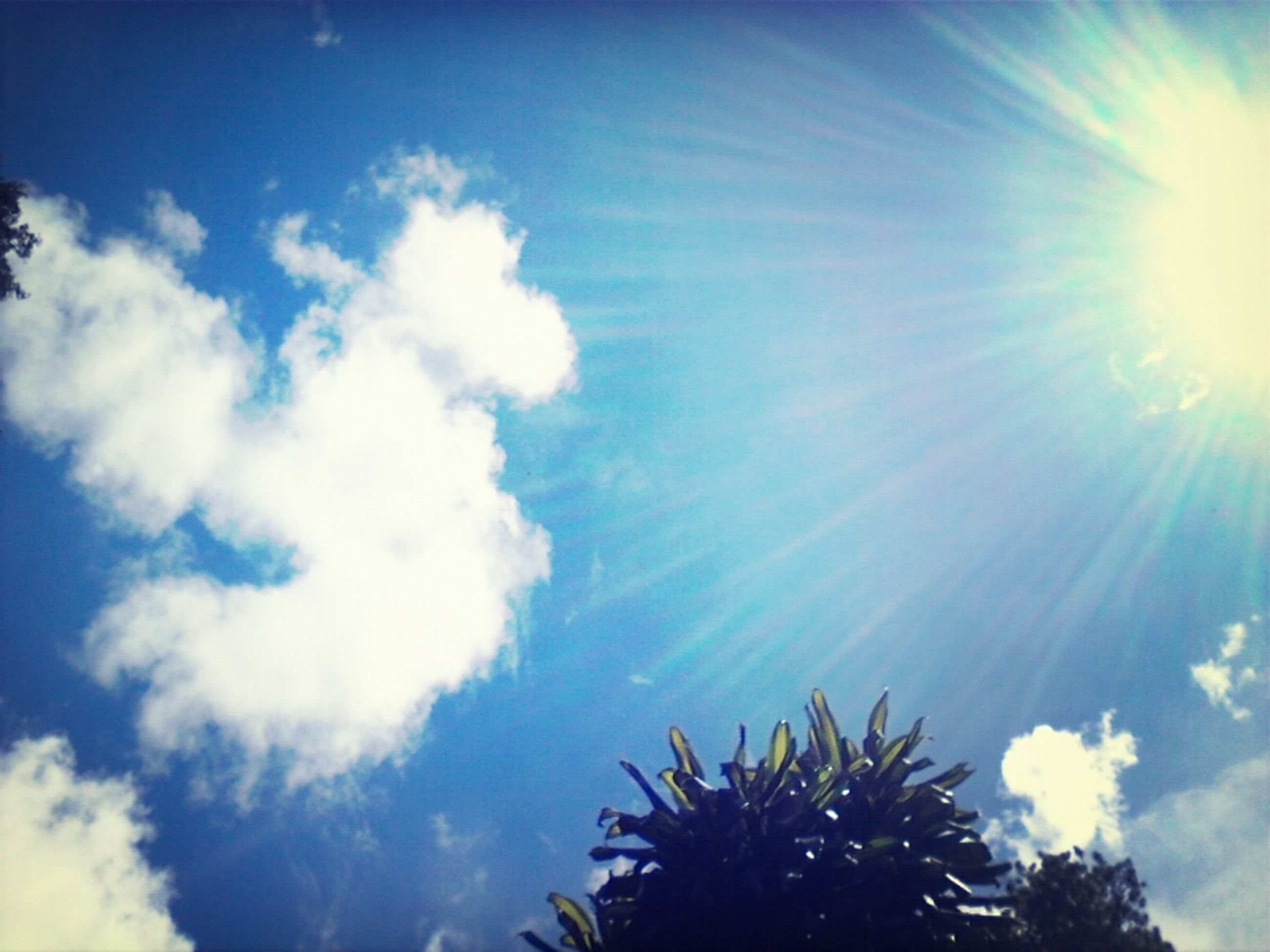 low angle view, sun, sunbeam, sky, beauty in nature, sunlight, tranquility, tree, nature, lens flare, cloud - sky, growth, blue, scenics, tranquil scene, sunny, bright, day, cloud, outdoors