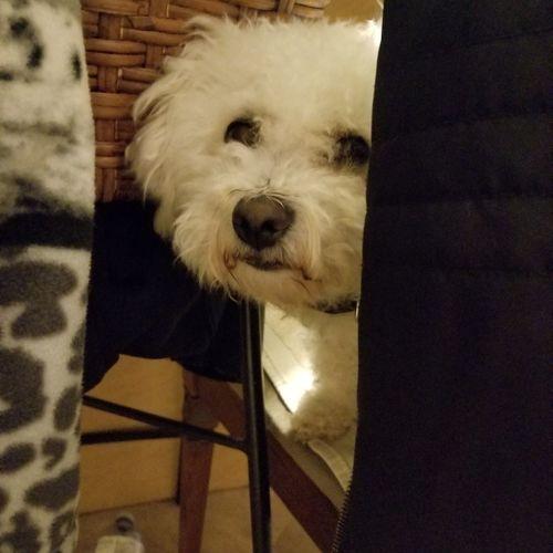 peek a boo Pet