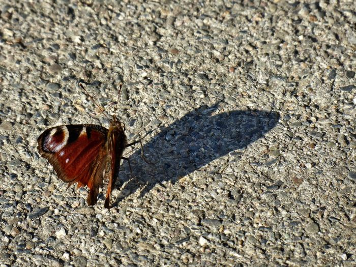 little beauty 😍 🦋 Butterfly Love Surrounded By Nature Nature Is My Sanctuary 🌳💚 For My Friends 😍😘🎁 Nature Is My Religion Mood Captures I'm Never Alone In Nature Eye4photography  Spring🌸 Zooooom❤ Take A Rest Beach Sand Sunlight Shadow Textured  High Angle View Close-up Springtime Decadence My Best Photo The Minimalist - 2019 EyeEm Awards