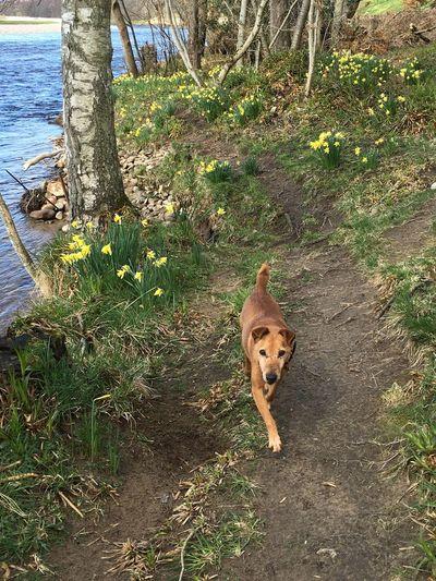 Dog Spring Flowers River