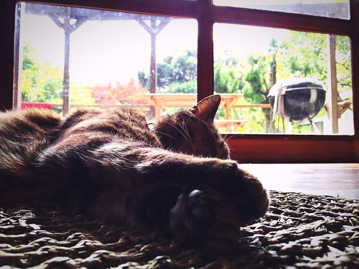 Catsofinstagram Love ♥ Peace And Quiet Relaxing InTheMorning