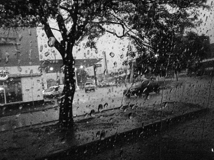 ♣~Me gusta la lluvia porque desdibuja la realidad. ~♣ Rain Vidrio Gotas Saltacity árbol Tree Tormenta Blackandwhite Blancoynegro Photo