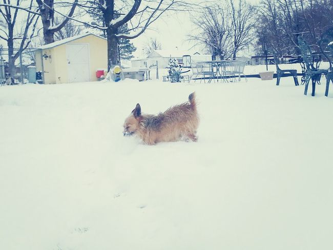my dog Cacho having a blast in the snow Hi! Enjoying Life Hello World Hanging Out
