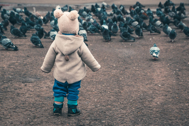 Rear View Of Child Looking At Pigeons On Field