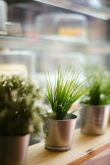Plastic grass Plant Potted Plant Growth No People Nature Green Color Close-up Indoors  Day Selective Focus Window Houseplant Table Cactus Succulent Plant Focus On Foreground Beauty In Nature Food And Drink Leaf Flower Pot