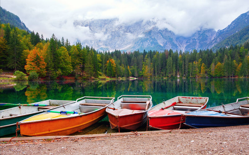 Boats moored on lake by trees in forest
