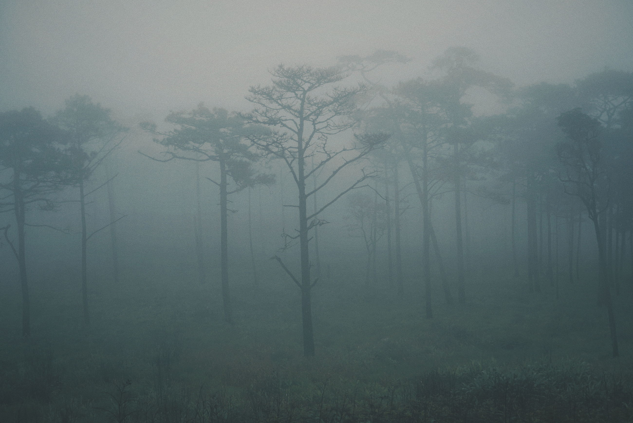 tree, fog, beauty in nature, plant, tranquility, tranquil scene, no people, land, hazy, environment, forest, nature, landscape, non-urban scene, scenics - nature, trunk, tree trunk, day, growth, outdoors