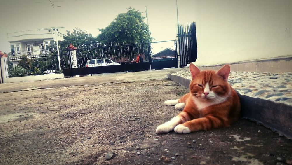 Enjoying the season Catlover Lazytime Tebingtinggi Cat Photography