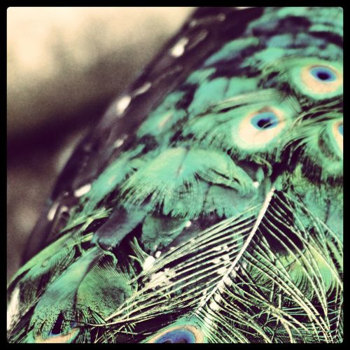 Day Feathers