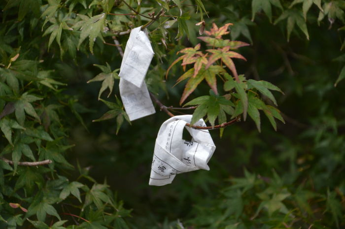Omikuji Or Fortune Telling Paper Fortune Telling God Gods Good Luck Sign Buddhism Close-up Green Color Leaf No People Omikuji Outdoors Paper Plant Shinto Shintoism