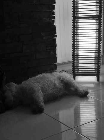 Indoors  Radiator No People Animal Dog Sleepy Long Day Sleeping Dog Fun Day Tired