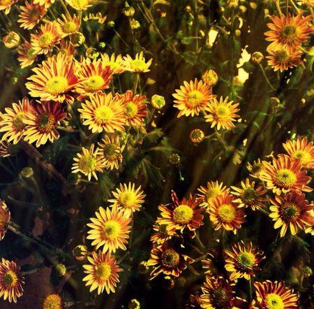 Thx For Invitation-Darkman Flower Friday Myfamilyhunt Streamzoofamily