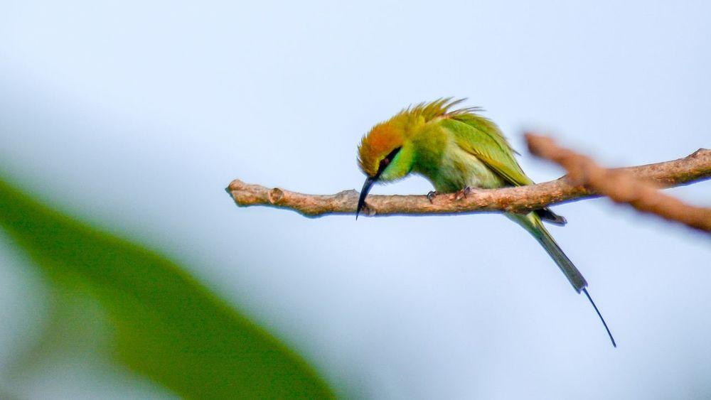 Nature Beauty In Nature Bird Watching Bird Photography Birds Of EyeEm  Eye Em Nature Lover Bird Green Bee-eater