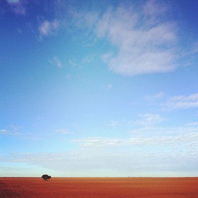 Good morning (and goodbye), Mildura. #roadtrip Roadtrip Tinyhorizon Solo_tree Lachlanpayneawesomeamazingphotosbestinstagramereverfollowmenow Payneroadtrip