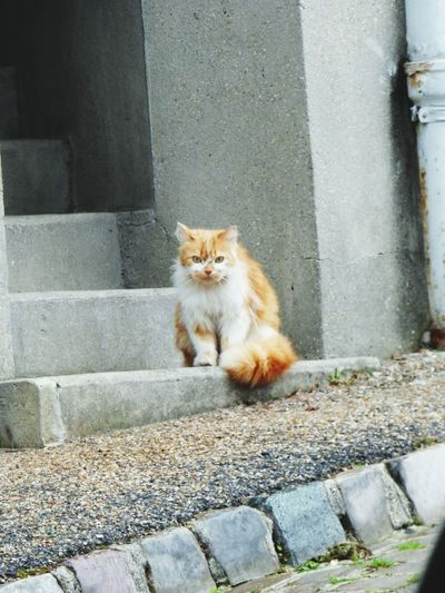 Hello World Cat♡ Taking Photos Photography Roux Bigcat