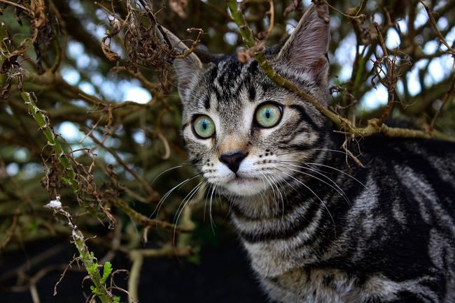 Cold Temperature Colours Kitten Prince  Cat One Animal Whisker Outdoors Portrait Close-up Nature Leopard Tree Day No People
