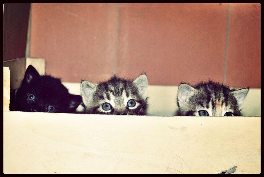 My newbies playing hide & seek, how adorable.. Cute Pets