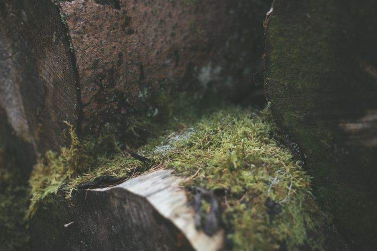 Close-up of moss growing on rocks in forest