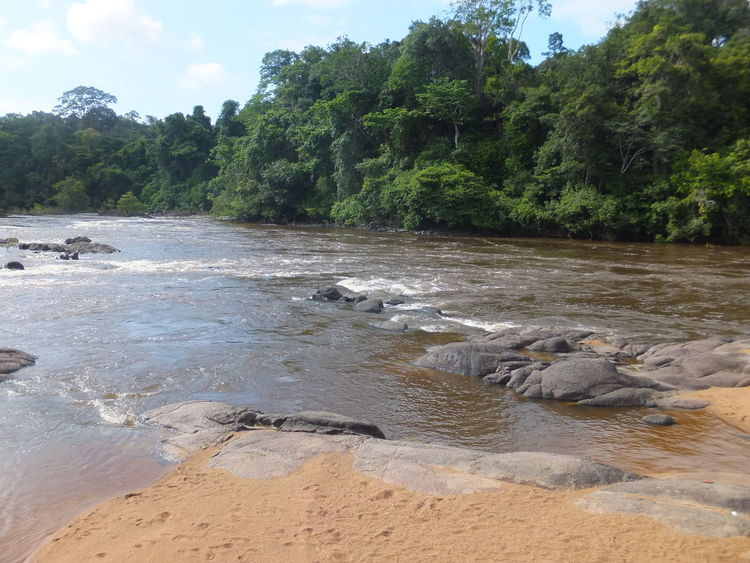 Beautiful nature scene at Raleighvallen Beautiful Landscape Beautiful Nature Beautiful River Beautiful Scene Beautiful Scenery Beauty In Nature EyeEmNewHere Forest Landscape Nature Nature Reserve No People Outdoors Rainforest Relaxing River Rocks Rocks And Water Sand Scenic Landscapes Scenic View Sky Suriname Tree Water