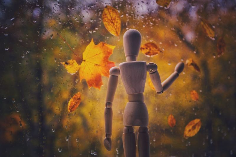Staying home in rainy day Woodyforest Close-up One Person Autumn Leaves Human Representation Autumn Creativity