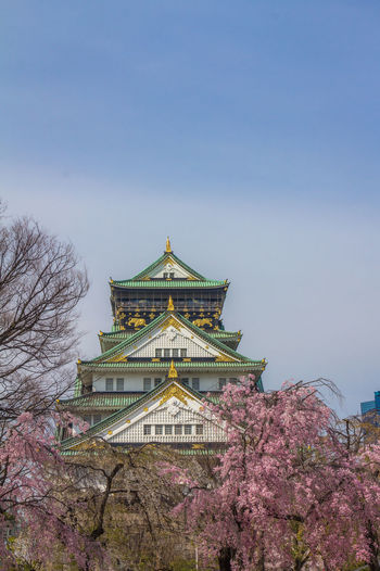 Nice view of Osaka Castle OSAKA Osaka,Japan Osaka Castle Osaka-shi,Japan Osaka 大阪 Architecture Built Structure Sky Building Exterior Tree Plant Building Nature Place Of Worship Religion No People Belief Tourism Travel Destinations Low Angle View Spirituality Day Travel Clear Sky Spire  Cherry Blossom
