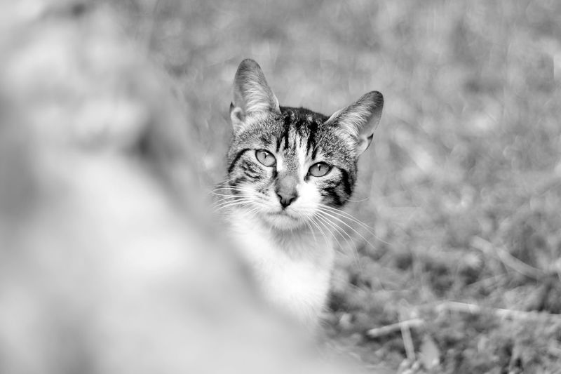 Cat in Ulus