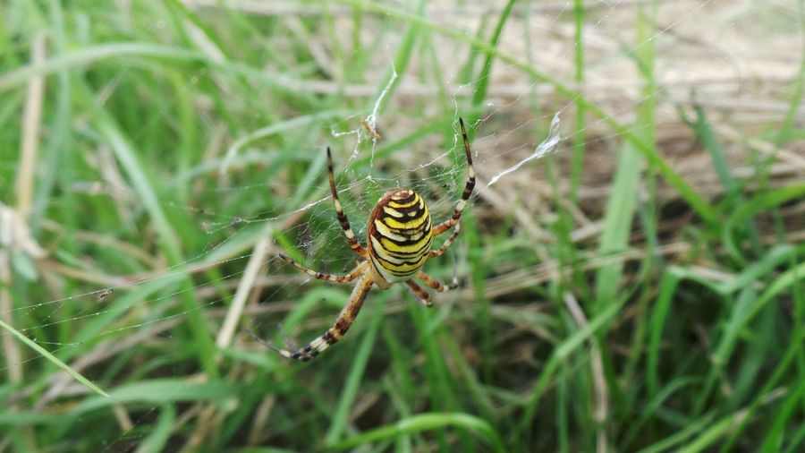 Nature Spinne Macro_collection