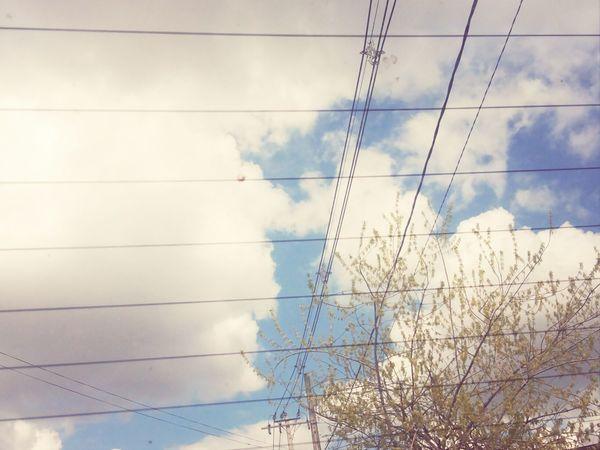 Nature Cloud Tree Girl {{ flores van girando entorno a ti otra vez}}