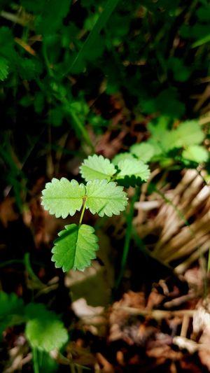 feuilles, leafs
