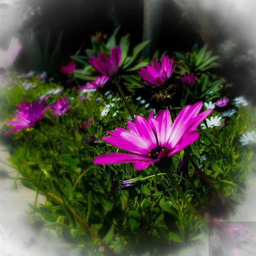 Flower Head Flower Pink Color Petal Close-up Plant