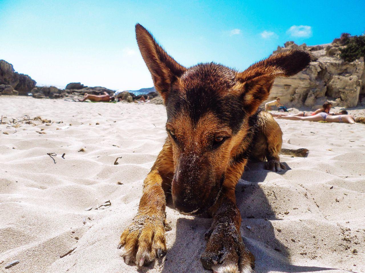 Dog Relaxing On Beach Against Sky