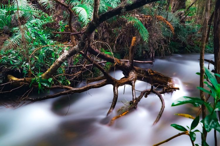 Beauty In Nature Branch Day Flowing Water Forest Green Color Growth Land Leaf Nature No People Outdoors Plant Plant Part Selective Focus Tranquility Tree Tree Trunk Trunk Water